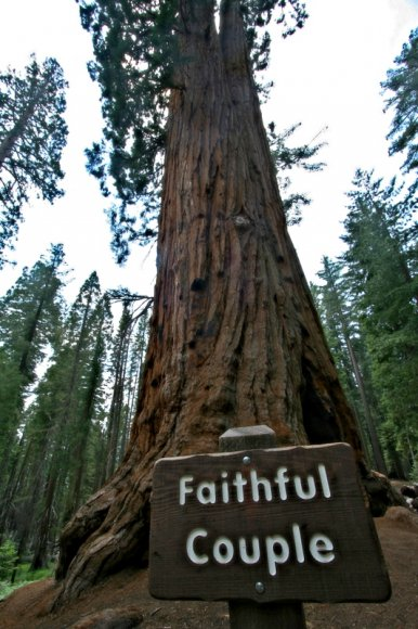 Mariposa Grove - Faithful Couple